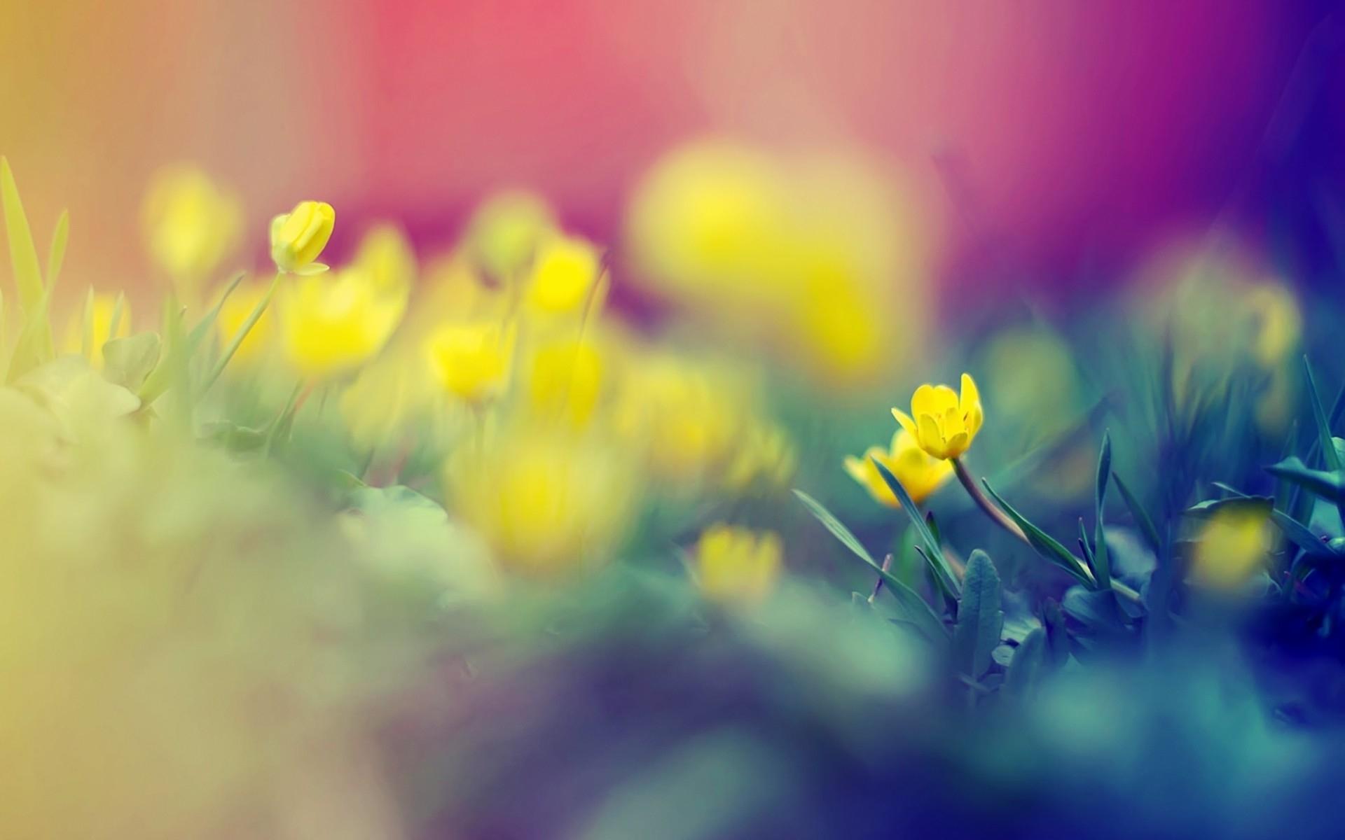 17370 скачать обои Растения, Цветы - заставки и картинки бесплатно
