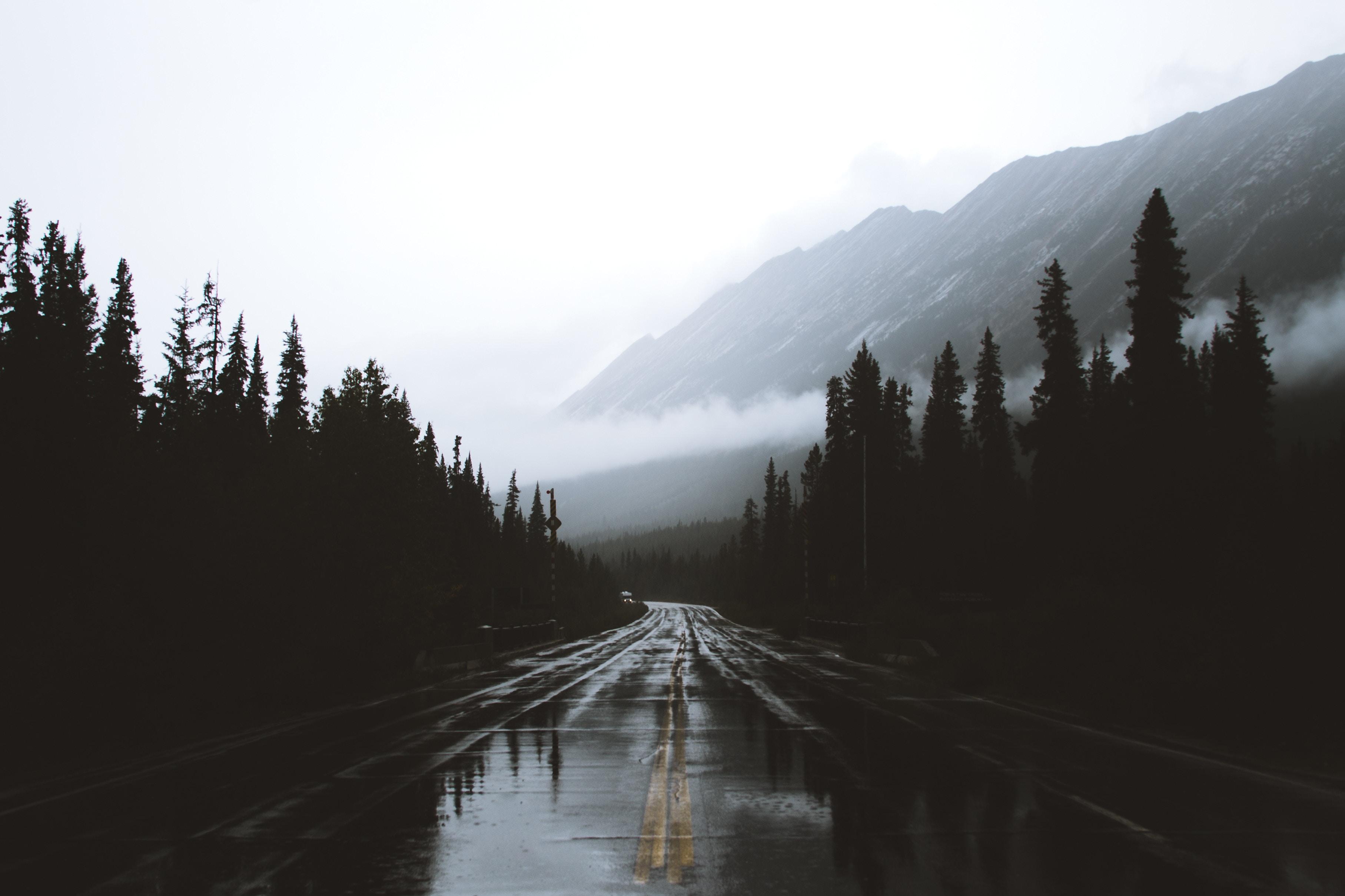 119768 Заставки и Обои Горы на телефон. Скачать Природа, Дорога, Туман, Разметка, Влажный, Альберта, Канада, Горы картинки бесплатно