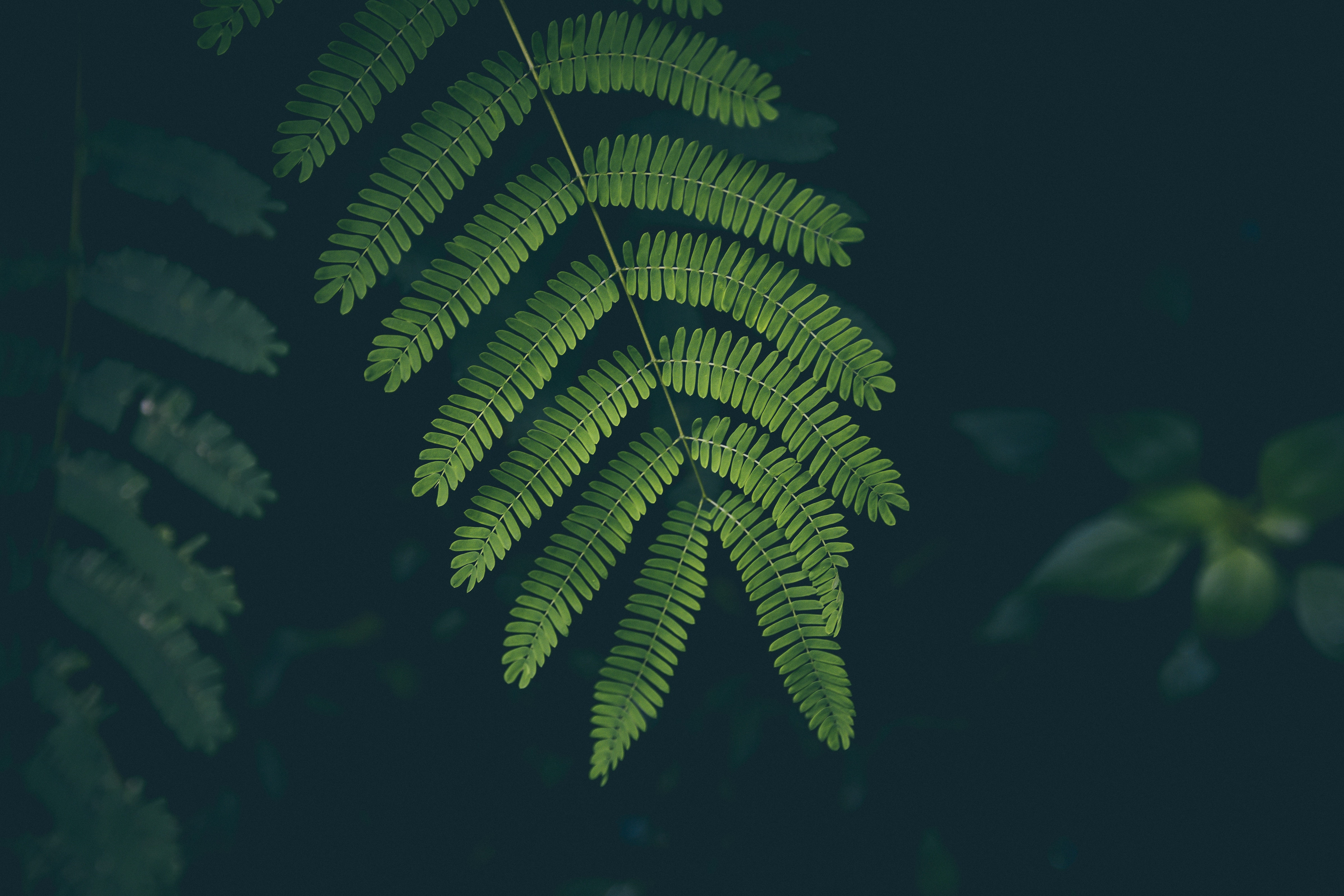 113197 download wallpaper Nature, Plant, Fern, Sheet, Leaf screensavers and pictures for free