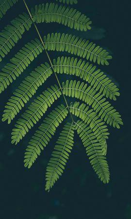 113197携帯電話用の緑壁紙を無料でダウンロード、自然, シダ, 羊歯, シート, 葉, 工場, 植物 緑写真と携帯電話用スクリーンセーバー
