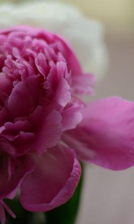 46822 baixar papel de parede Plantas, Flores - protetores de tela e imagens gratuitamente
