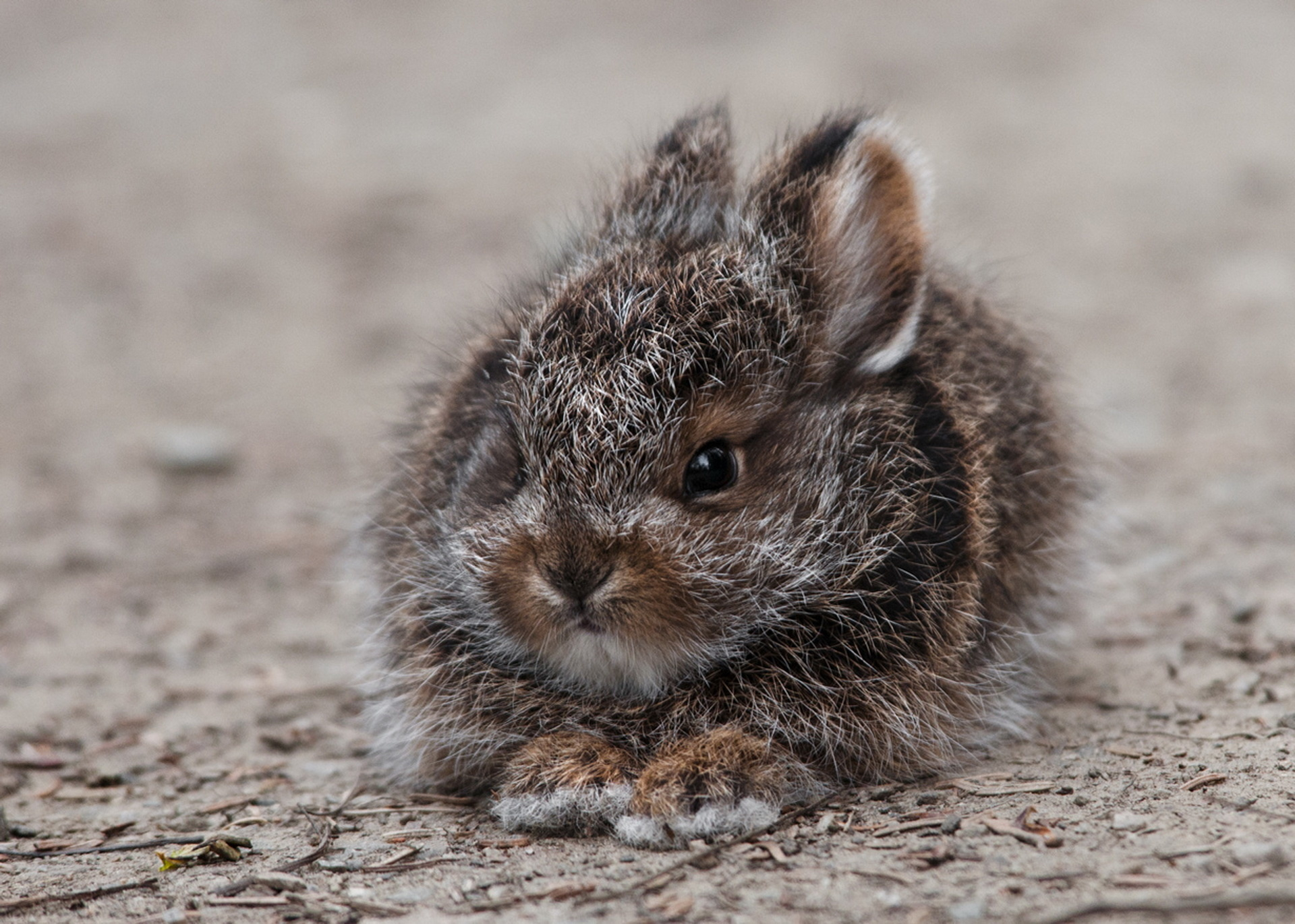 143476 Screensavers and Wallpapers Nice for phone. Download Animals, Fluffy, Fright, Nice, Sweetheart, Rabbit, Hare pictures for free