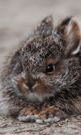 143476 download wallpaper Animals, Rabbit, Hare, Nice, Sweetheart, Fluffy, Fright screensavers and pictures for free
