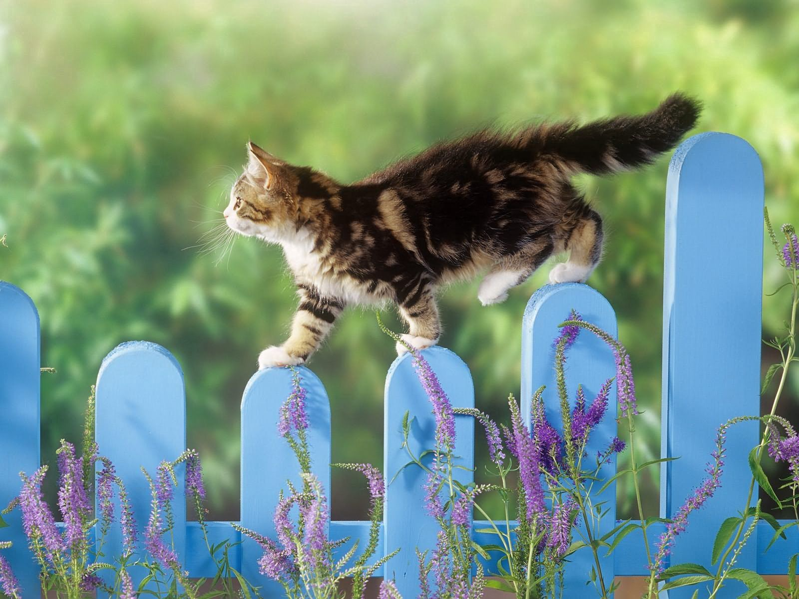 104887 Screensavers and Wallpapers Kitten for phone. Download Animals, Fluffy, Kitty, Kitten, Fence, Stroll pictures for free