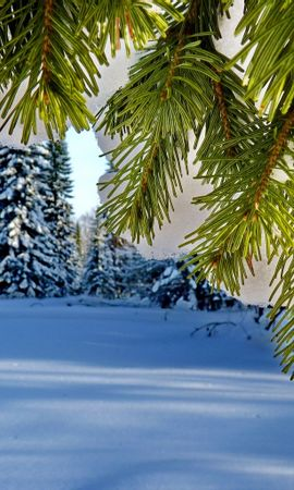 22911 скачать обои Растения, Пейзаж, Зима, Деревья, Снег, Елки - заставки и картинки бесплатно