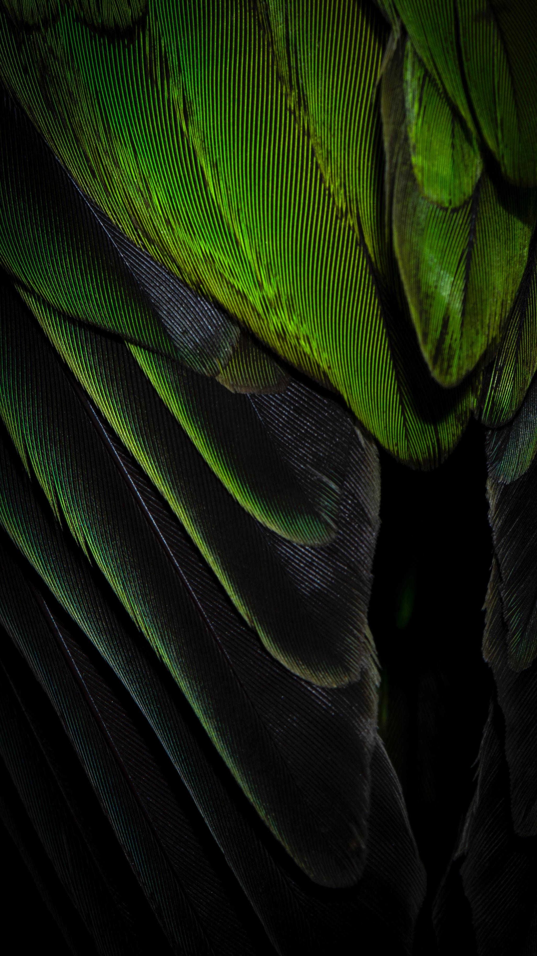 142912 Salvapantallas y fondos de pantalla Texturas en tu teléfono. Descarga imágenes de Texturas, Textura, Color, Pluma gratis