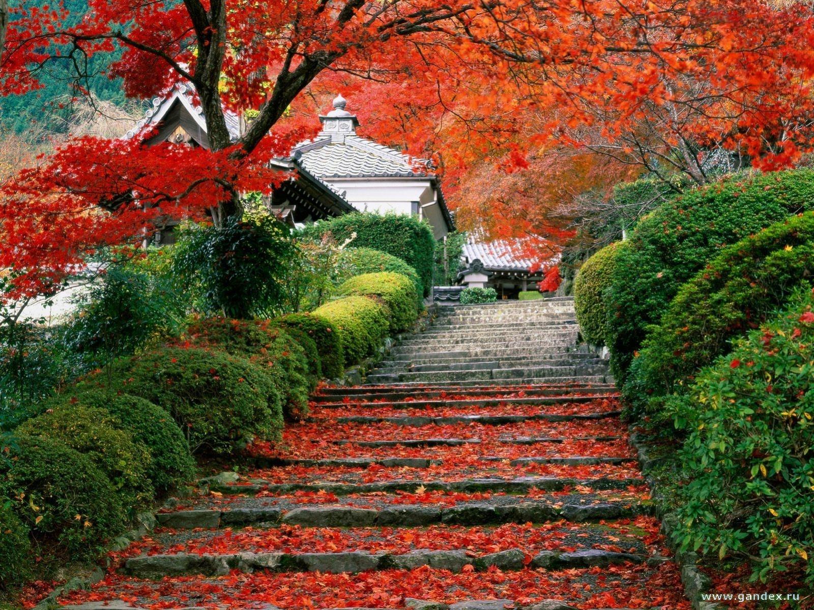 6964 скачать обои Пейзаж, Осень, Листья - заставки и картинки бесплатно