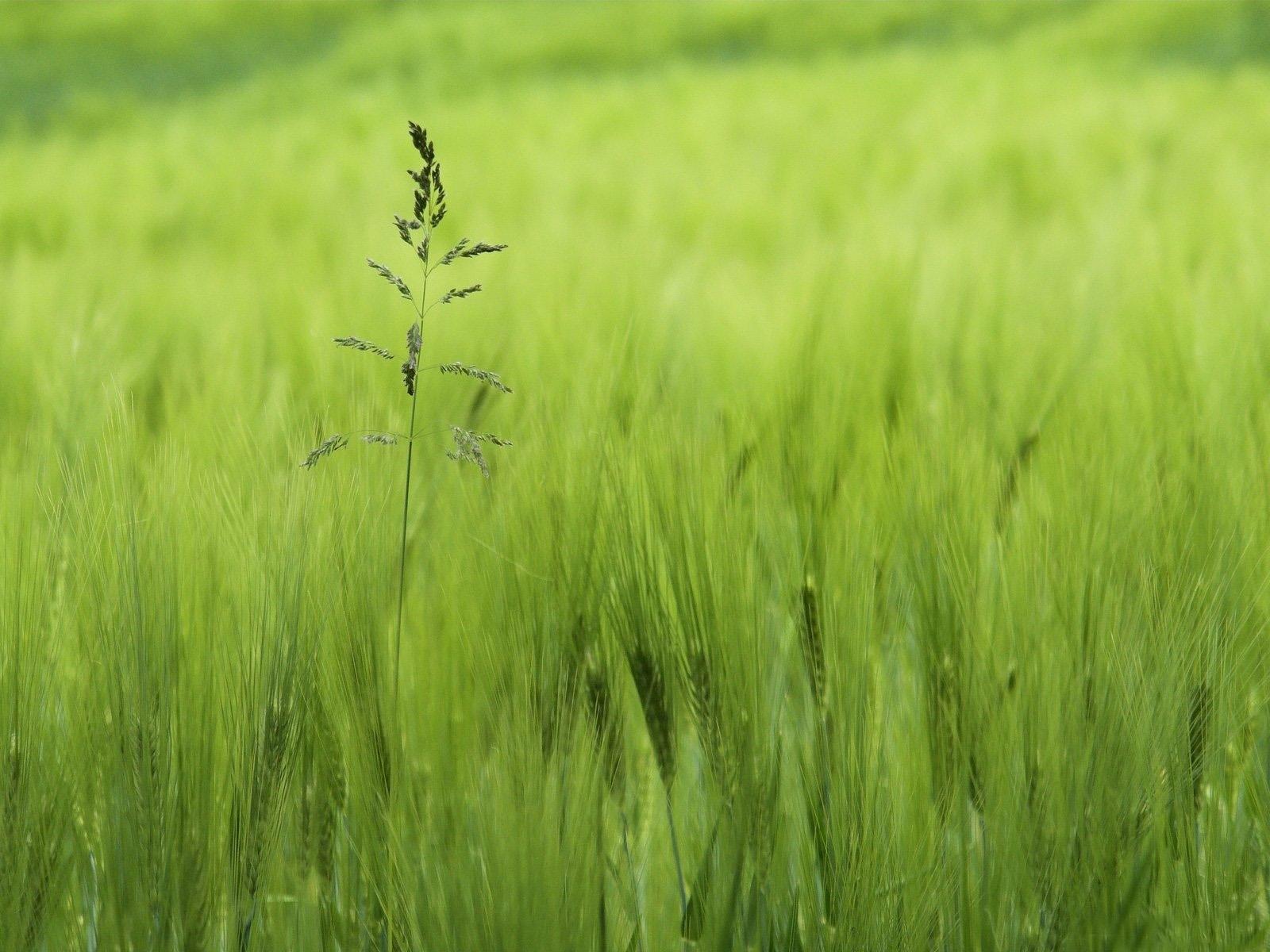5840 скачать обои Растения, Трава - заставки и картинки бесплатно