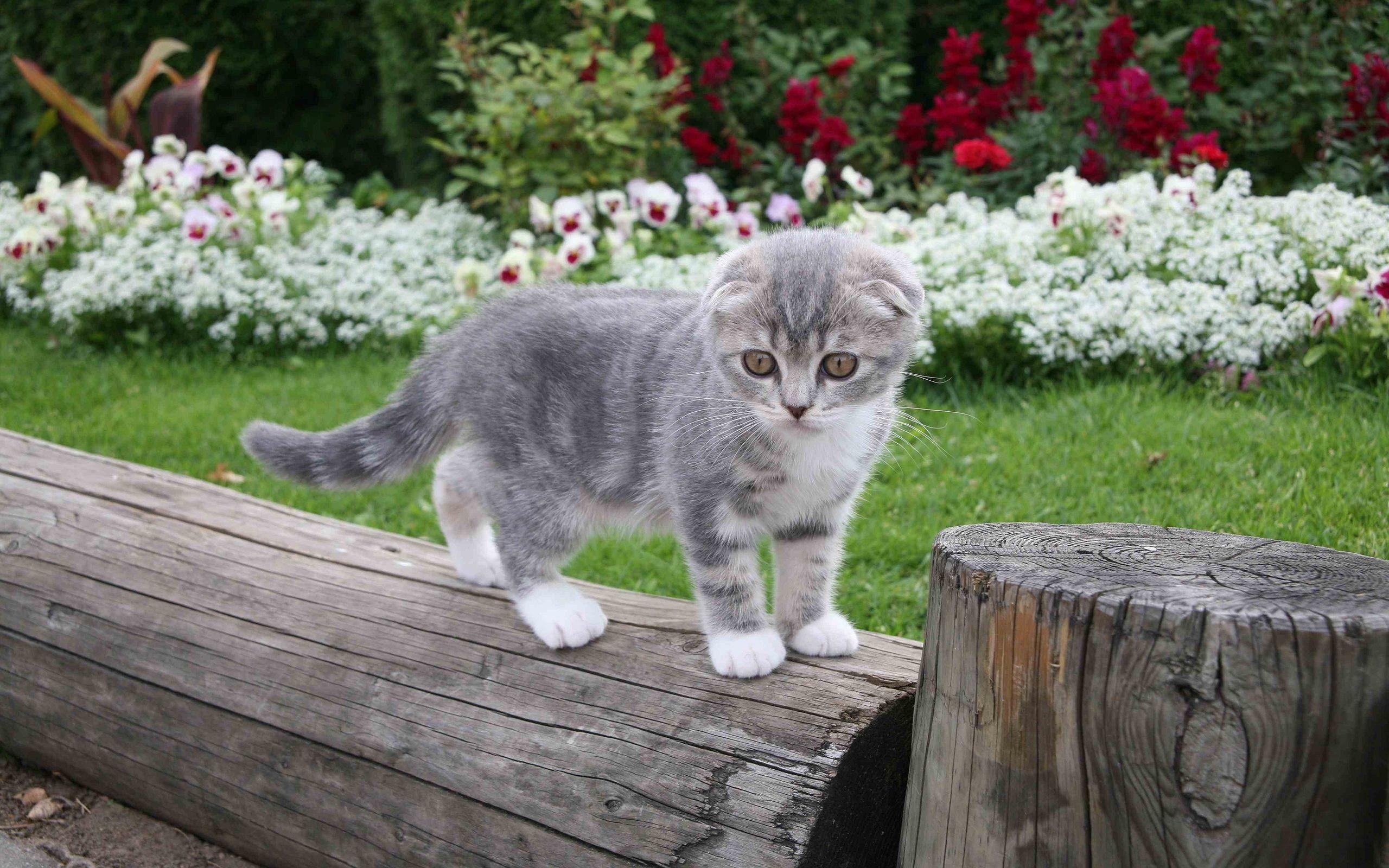 24413 скачать обои Кошки (Коты, Котики), Животные - заставки и картинки бесплатно