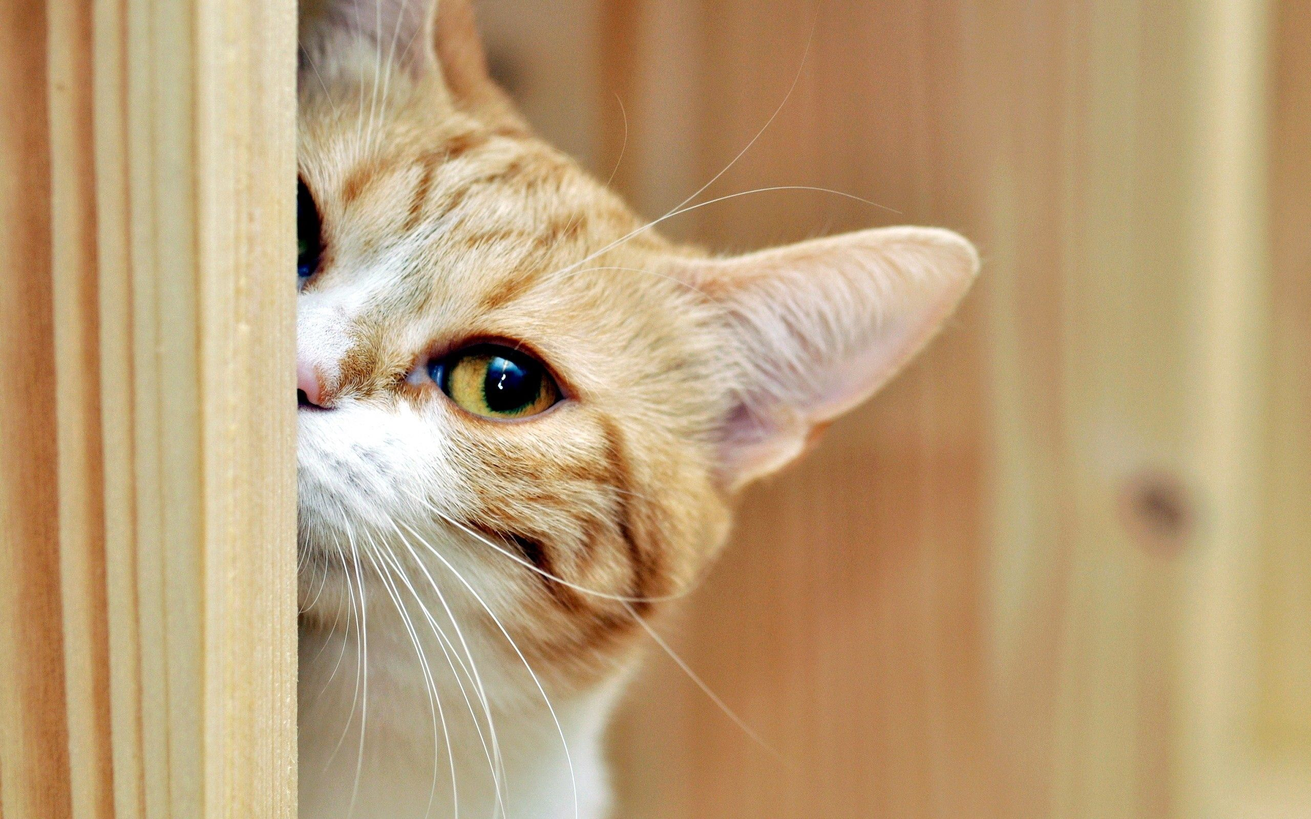 111079 download wallpaper Animals, Cat, Muzzle, Spotted, Spotty, Peek Out, Look Out screensavers and pictures for free