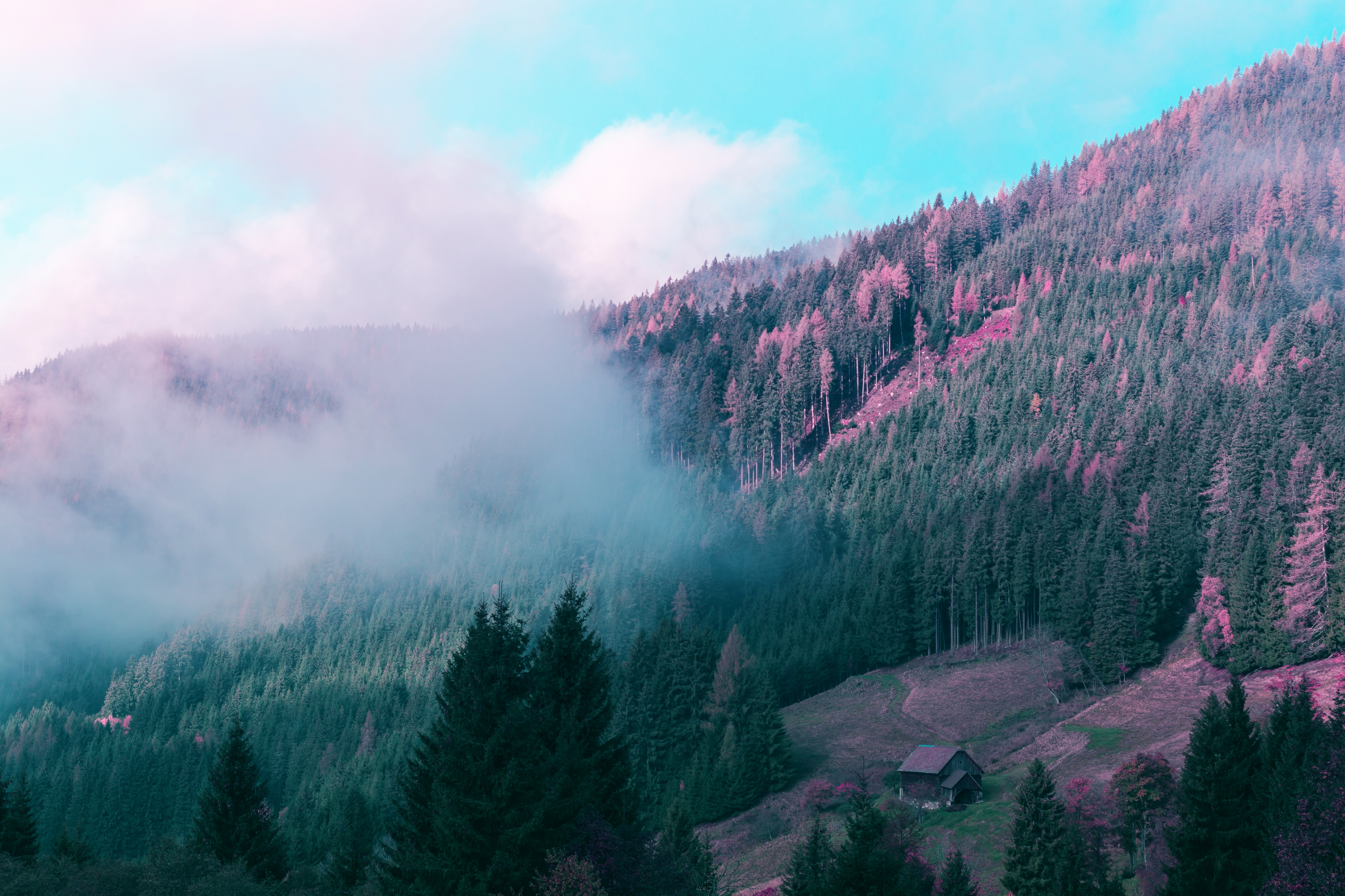 51733 download wallpaper Nature, Trees, Mountains, Fog, Austria, Small House, Lodge, Elevation, Gezouse National Park, Admont, Gesoise National Park screensavers and pictures for free
