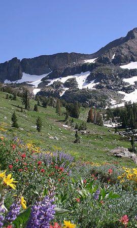 153591 télécharger le fond d'écran Nature, Pente, Pré, Neige, Sommet, Retour Au Début, Montagnes, Fleurs - économiseurs d'écran et images gratuitement