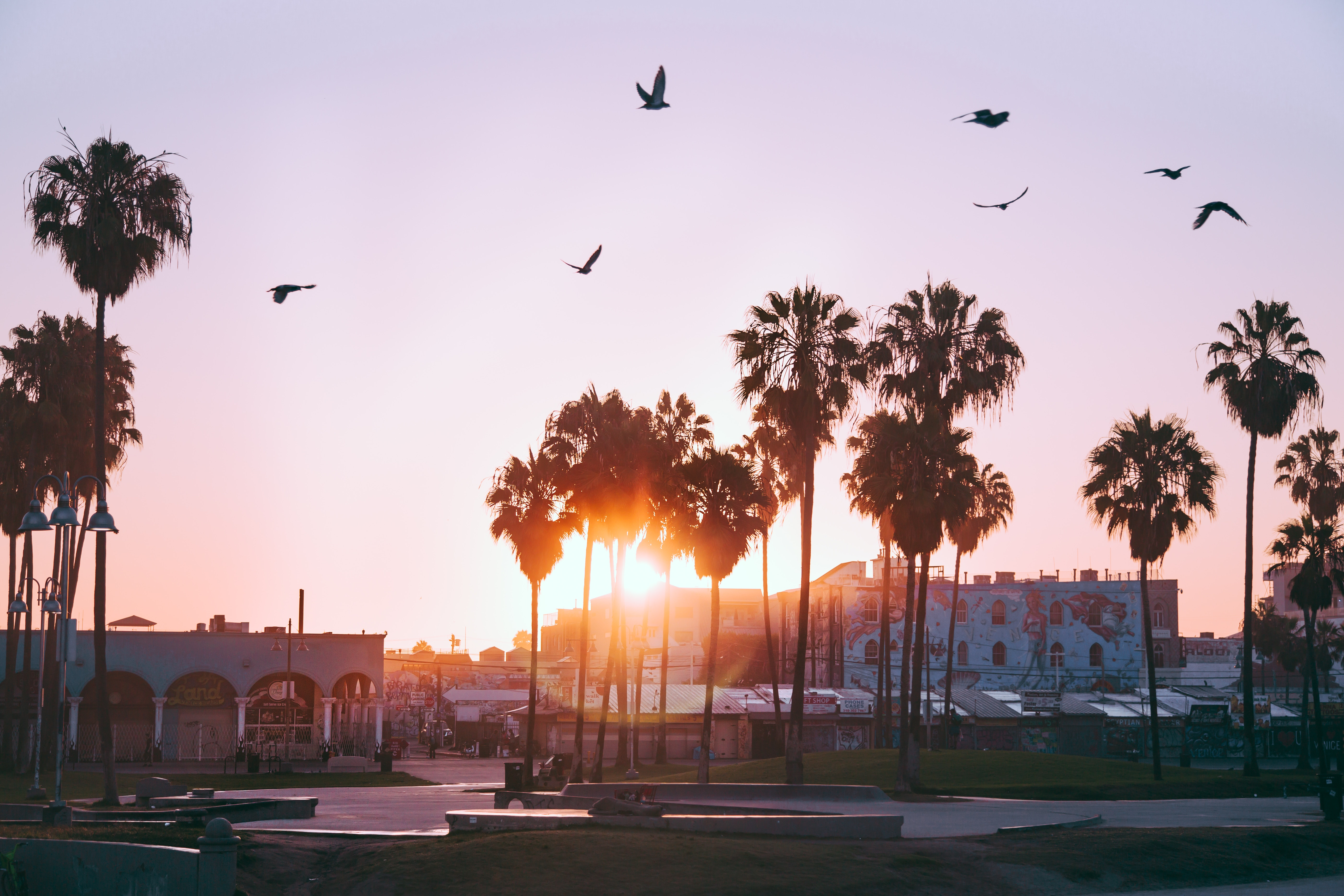145717 download wallpaper Dawn, Venice Beach, Los Angeles, Usa, United States, Cities, Birds, Palms screensavers and pictures for free