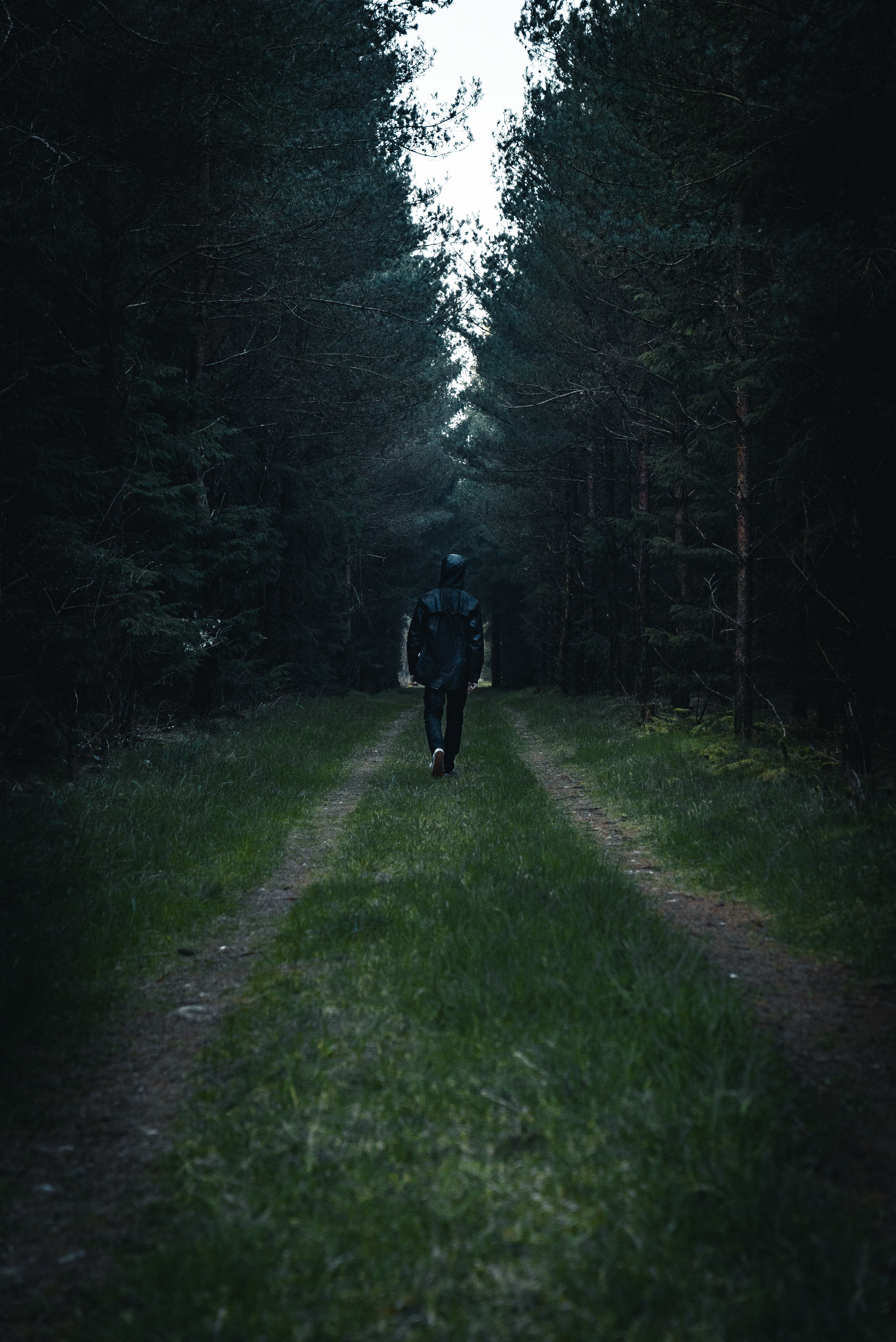 96150 Screensavers and Wallpapers Human for phone. Download Loneliness, Trees, Miscellanea, Miscellaneous, Road, Forest, Human, Person, Glade, Clearing pictures for free