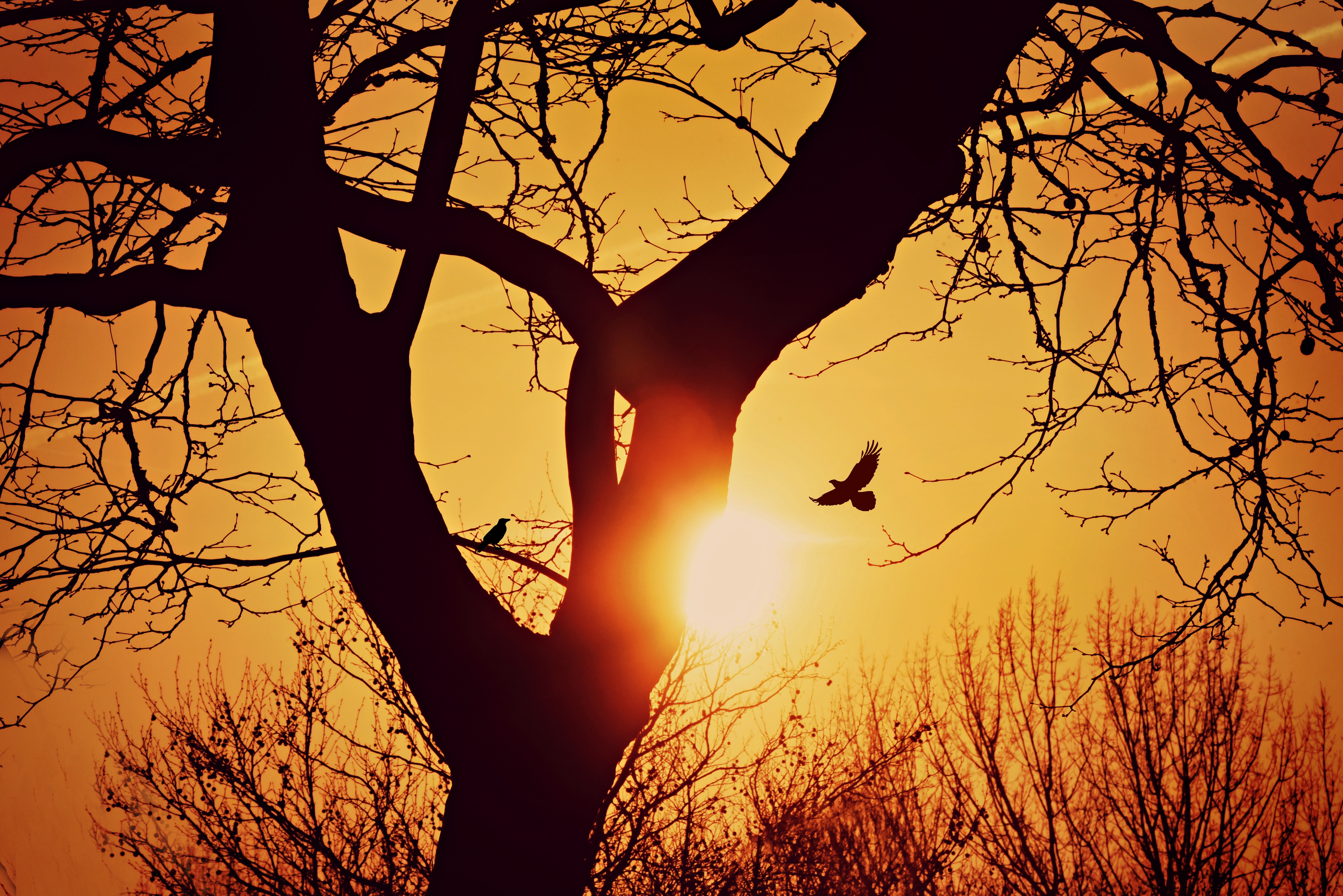 122075 download wallpaper Nature, Bird, Silhouette, Sunset, Flight, Branches, Wood, Tree screensavers and pictures for free