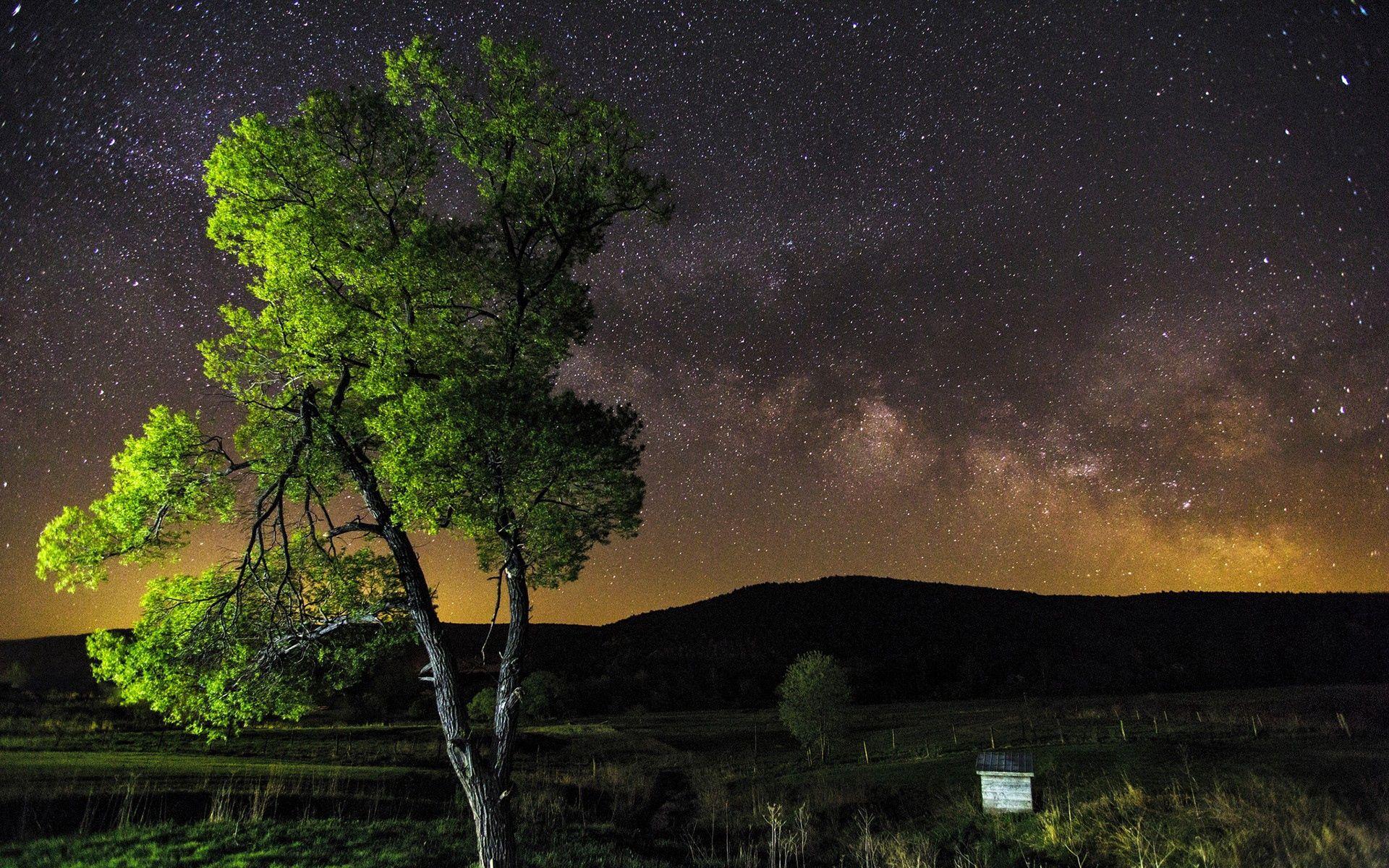 77782 papel de parede 2160x3840 em seu telefone gratuitamente, baixe imagens Natureza, Céu, Estrelas, Noite, Madeira, Árvore 2160x3840 em seu celular