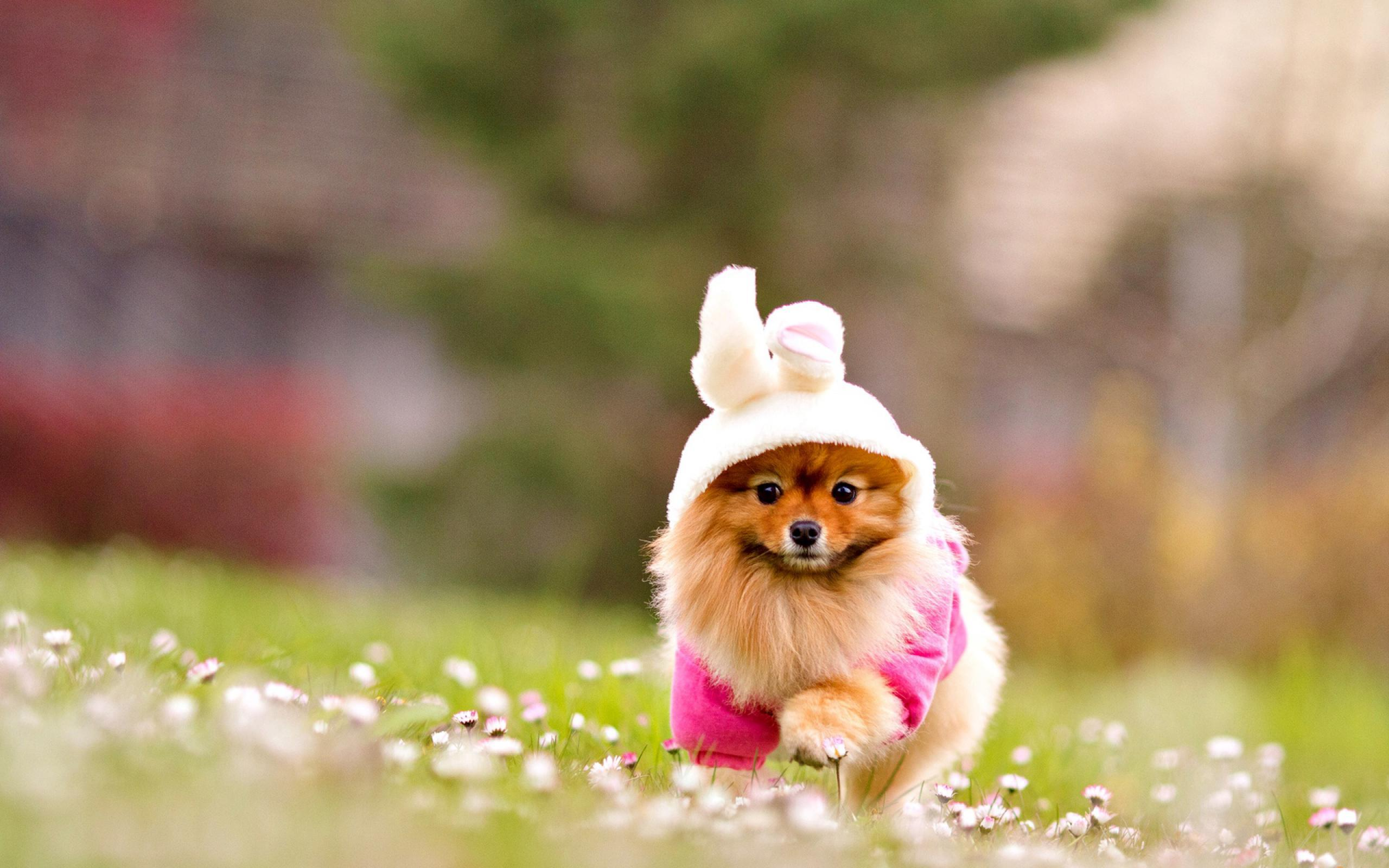 16160 download wallpaper Animals, Dogs screensavers and pictures for free