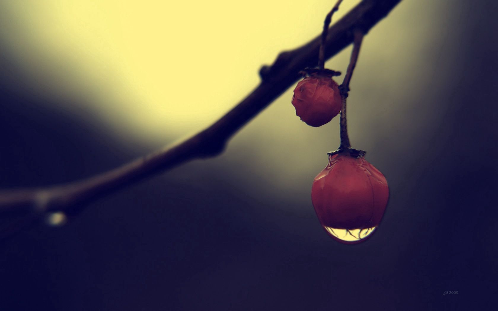79401 download wallpaper Macro, Berry, Drops, Branch, Shadow screensavers and pictures for free