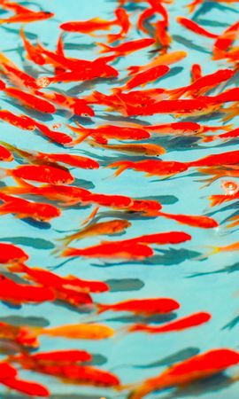 154707 download wallpaper Animals, Fish, Water, To Swim, Swim screensavers and pictures for free