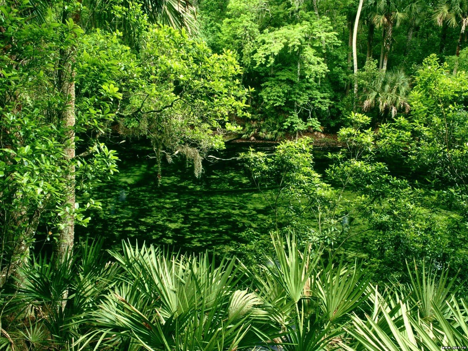 Download mobile wallpaper Trees, Plants, Landscape for free.