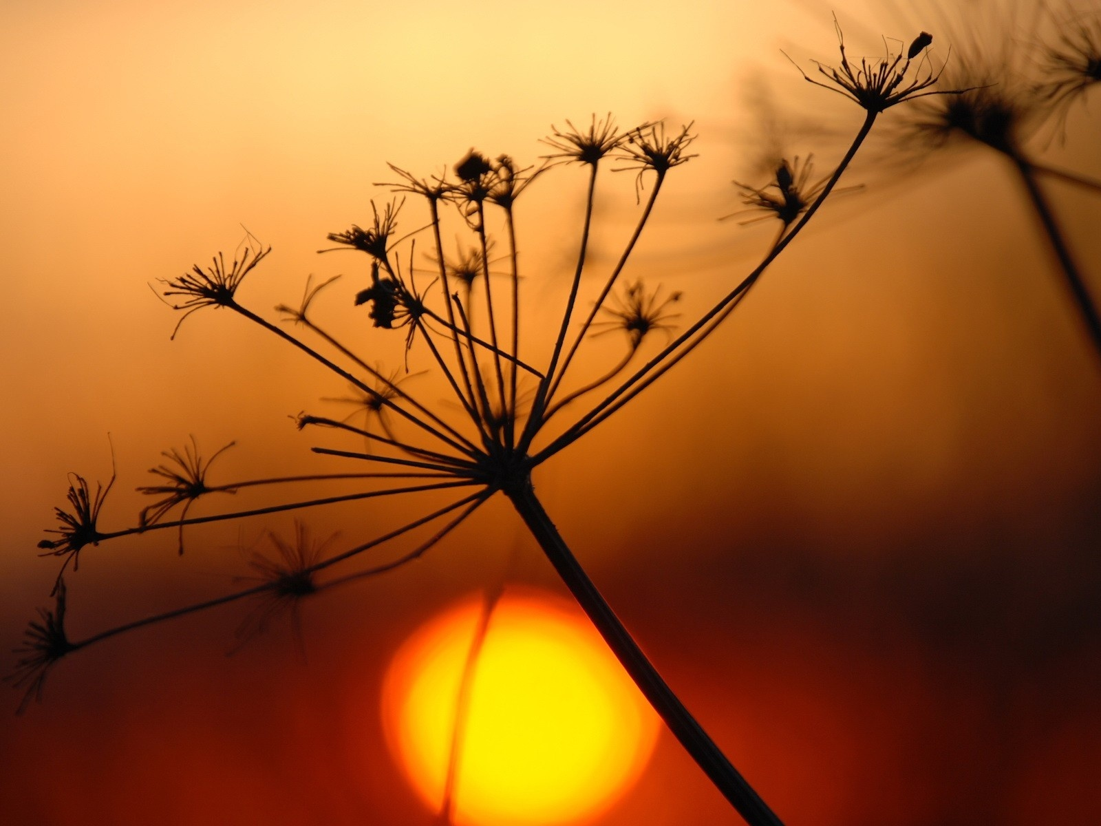 18007 скачать обои Растения, Пейзаж, Закат - заставки и картинки бесплатно