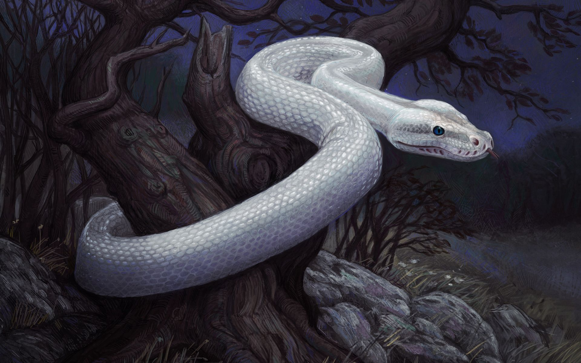 118220 Screensavers and Wallpapers Snake for phone. Download Stones, Art, Night, Wood, Tree, Snake pictures for free