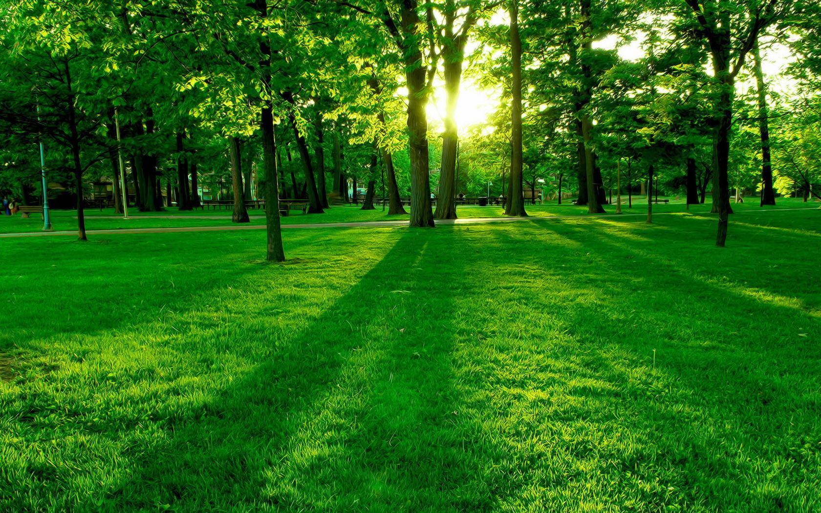 16647 скачать обои Пейзаж, Деревья, Трава - заставки и картинки бесплатно