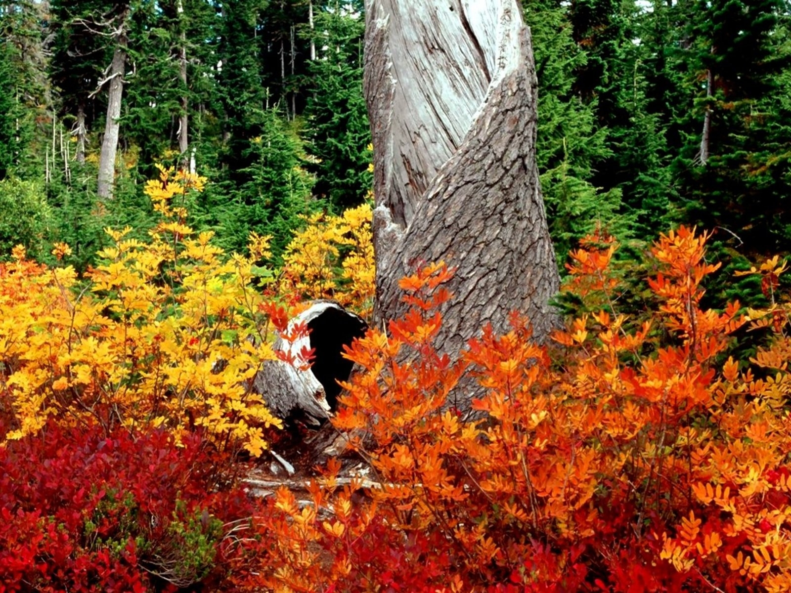 10130 скачать обои Пейзаж, Деревья, Осень, Листья - заставки и картинки бесплатно