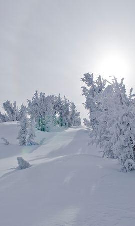 154998 скачать обои Природа, Деревья, Снег, Солнечный Свет, Зима, Пейзаж - заставки и картинки бесплатно