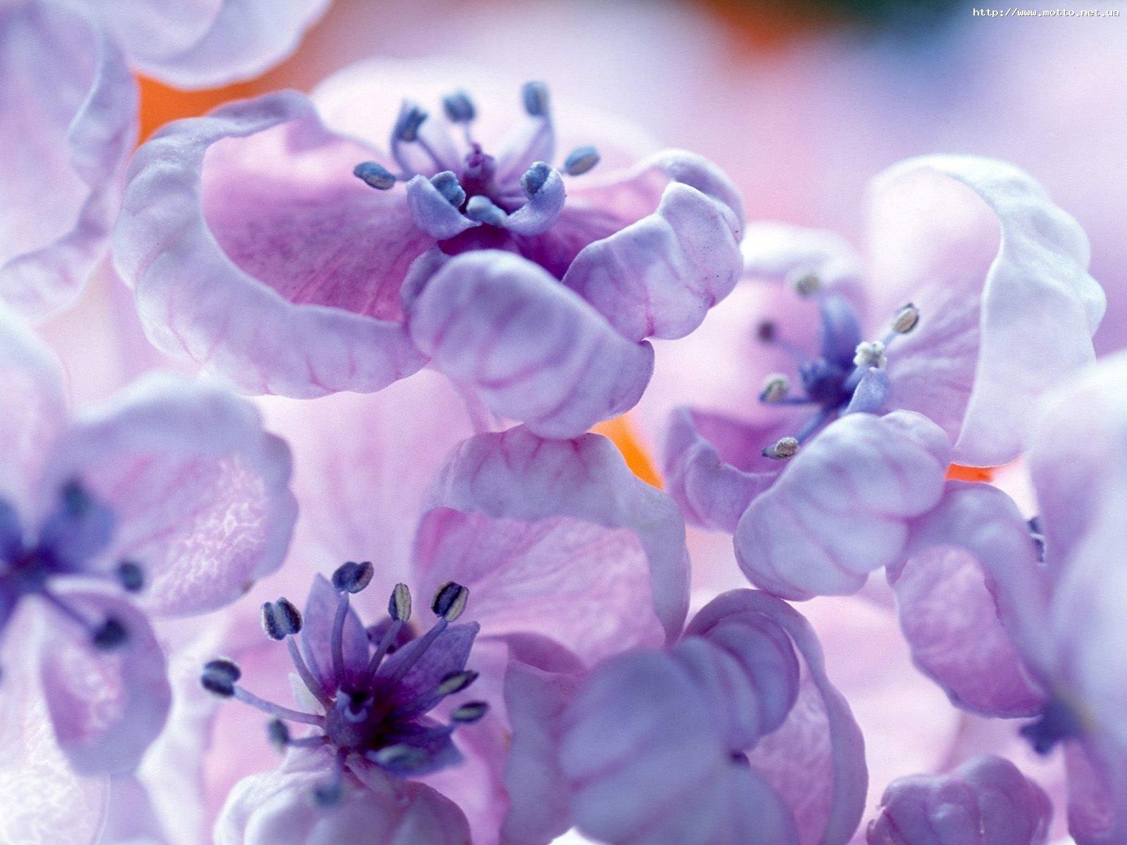 3956 скачать обои Растения, Цветы - заставки и картинки бесплатно