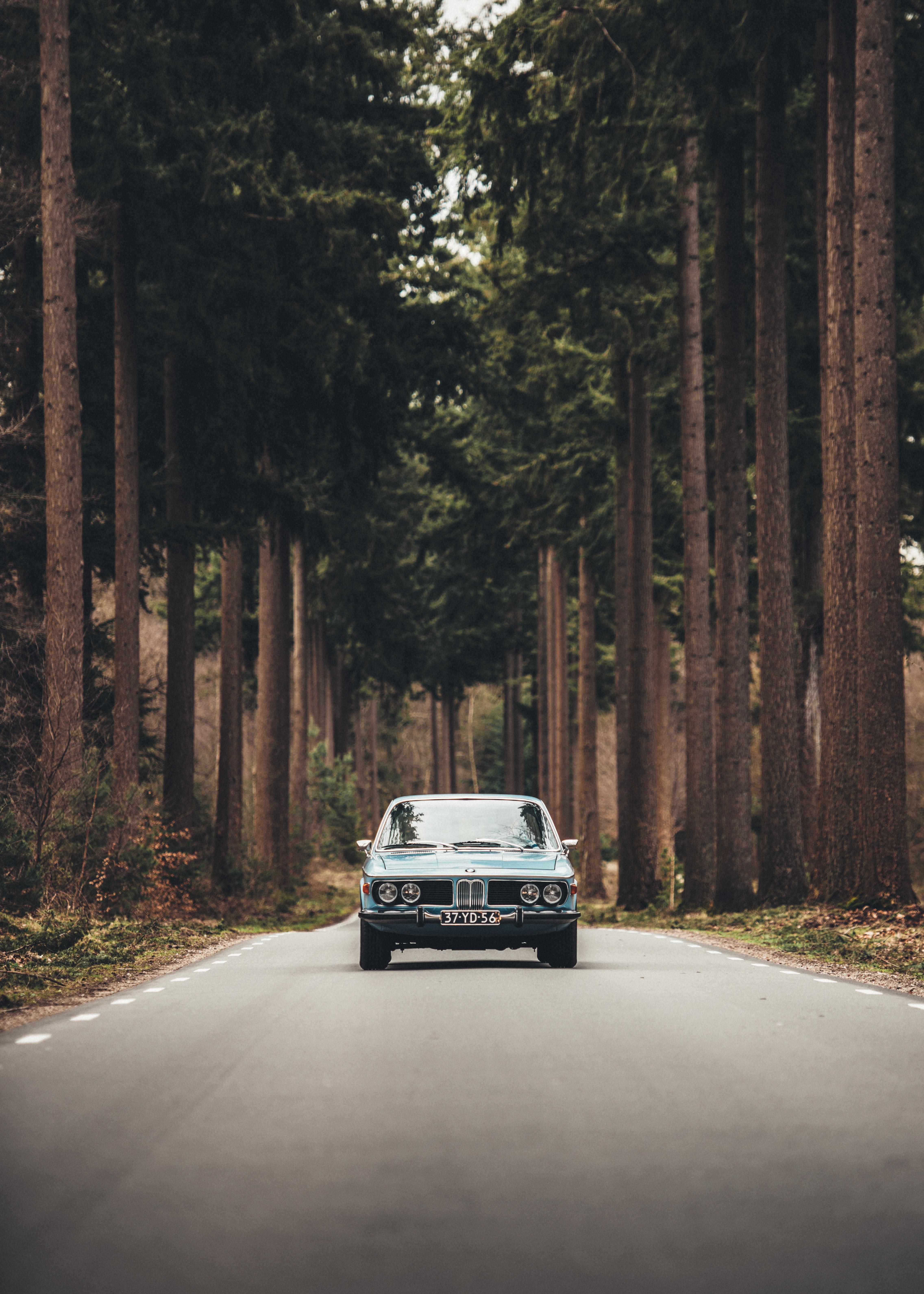 124791 скачать обои Тачки (Cars), Машины, Дорога, Вид Спереди, Деревья - заставки и картинки бесплатно