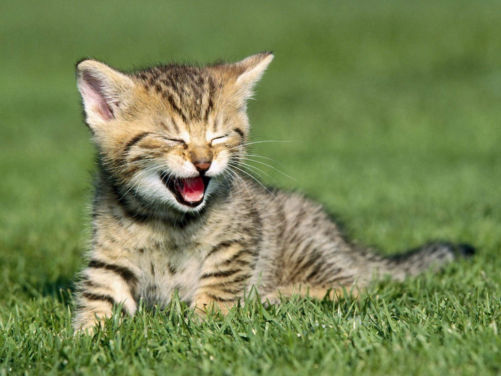 90259 Hintergrundbild herunterladen Tiere, Grass, Sitzen, Kätzchen, Schrei, Weinen - Bildschirmschoner und Bilder kostenlos