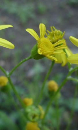 46010 descargar fondo de pantalla Plantas, Flores: protectores de pantalla e imágenes gratis