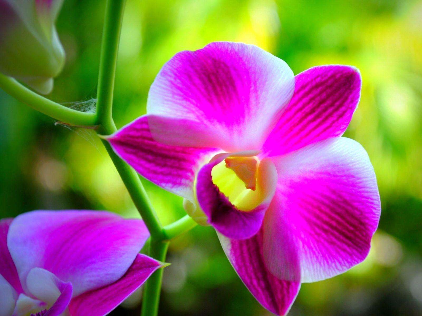 3862 скачать обои Растения, Цветы - заставки и картинки бесплатно