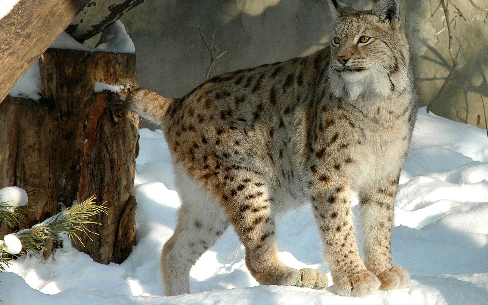 112982 download wallpaper Animals, Winter, Snow, Iris, Forest screensavers and pictures for free