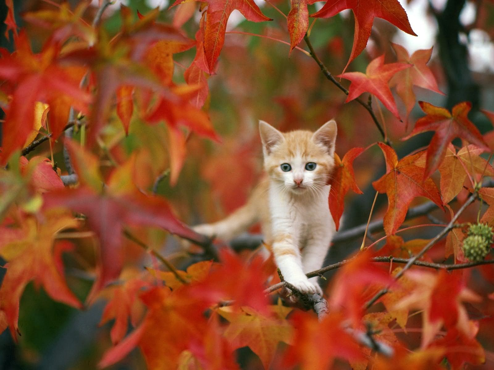 58130 download wallpaper Animals, Leaves, Kitty, Kitten, Hide screensavers and pictures for free