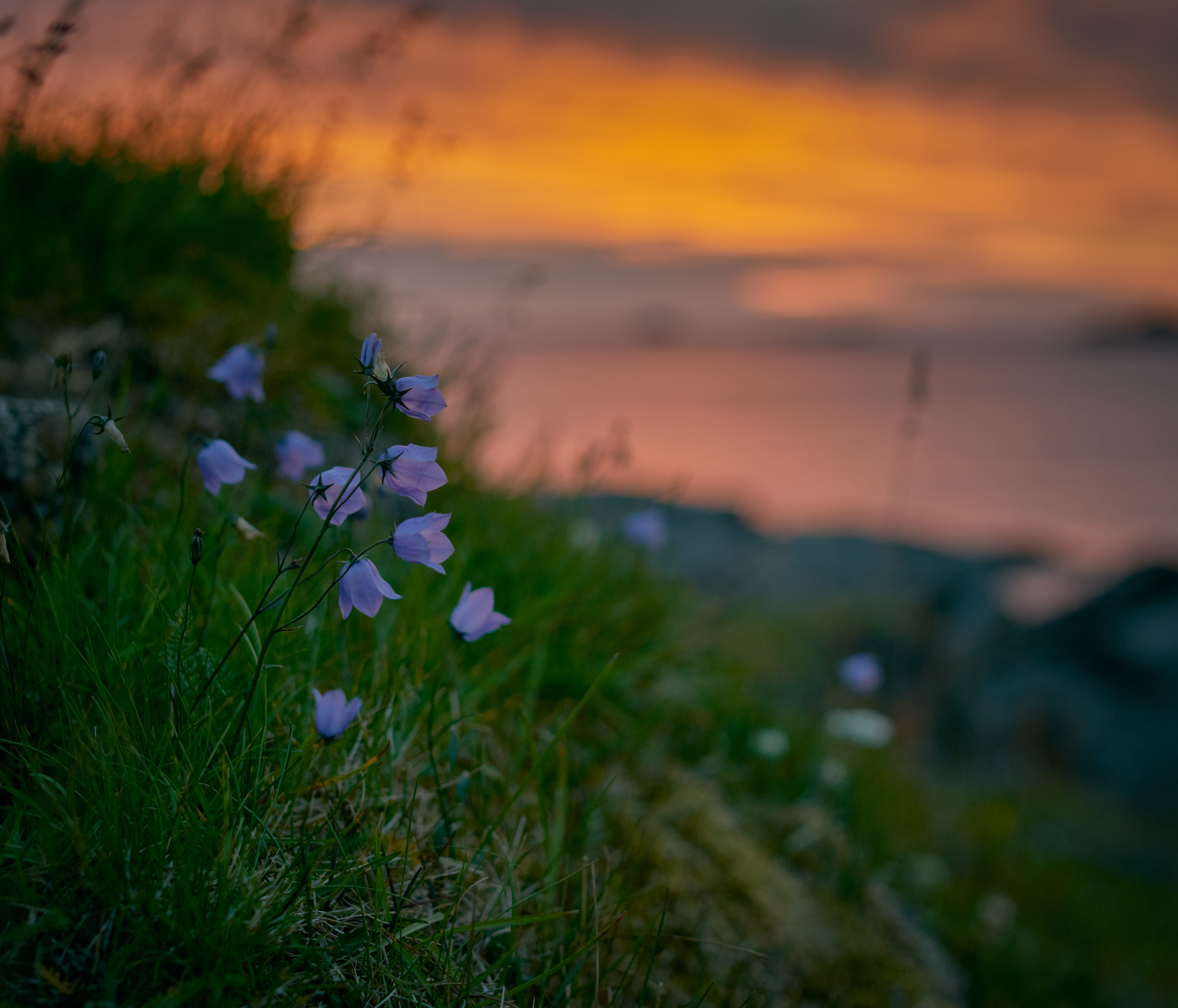 69726 Screensavers and Wallpapers Summer for phone. Download Flowers, Grass, Summer, Bluebells, Wildflowers pictures for free