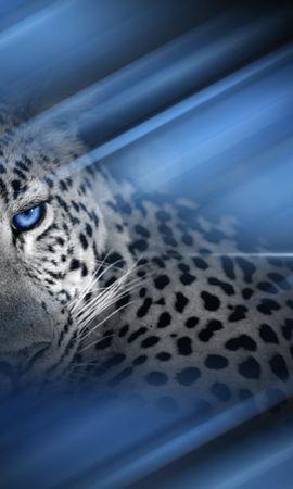 1651 descargar fondo de pantalla Animales, Leopardos: protectores de pantalla e imágenes gratis