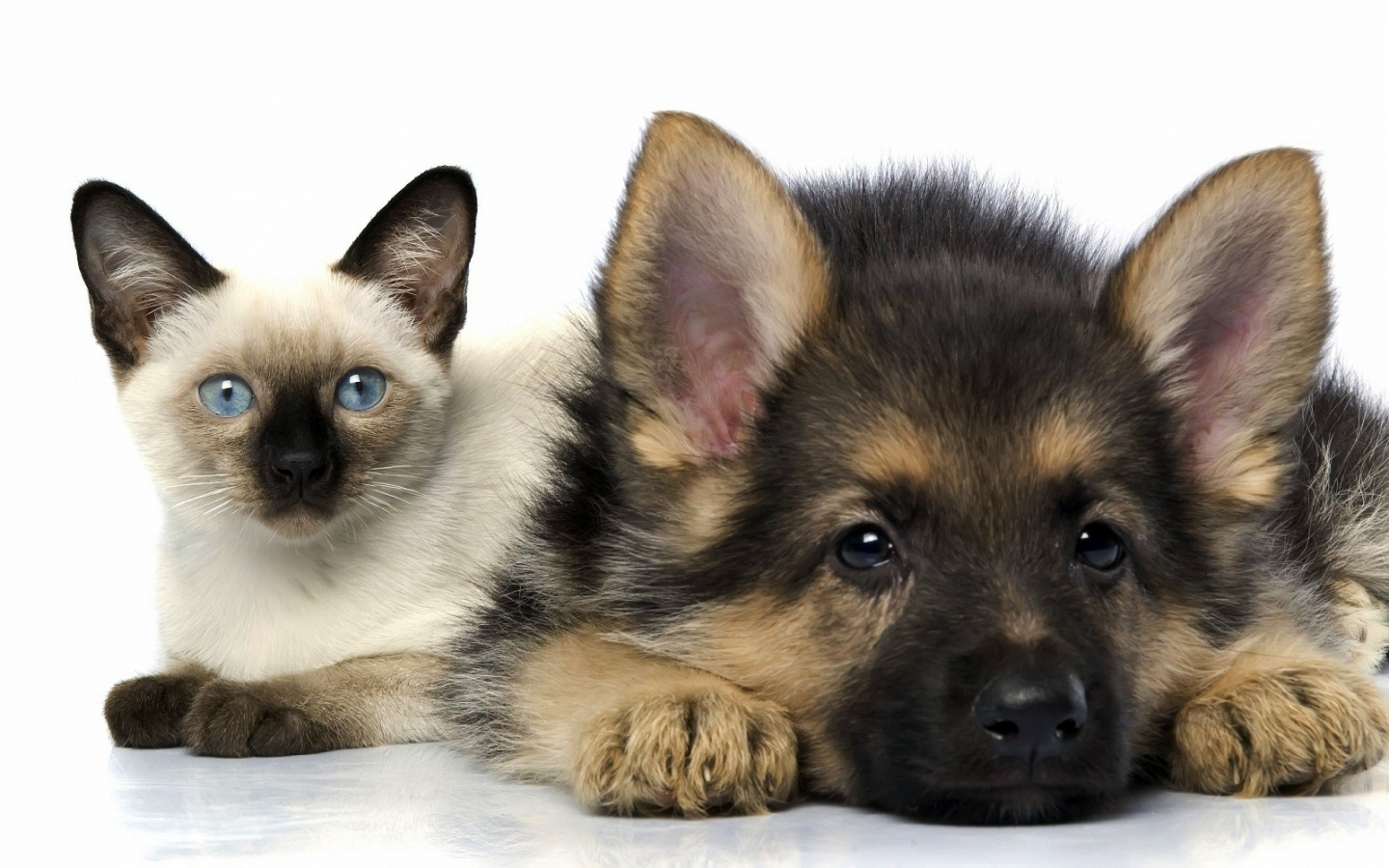 25864 download wallpaper Animals, Cats, Dogs screensavers and pictures for free