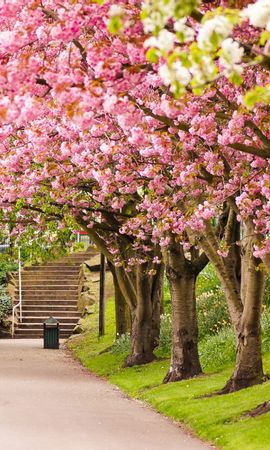 22052 скачать обои Пейзаж, Цветы, Деревья - заставки и картинки бесплатно