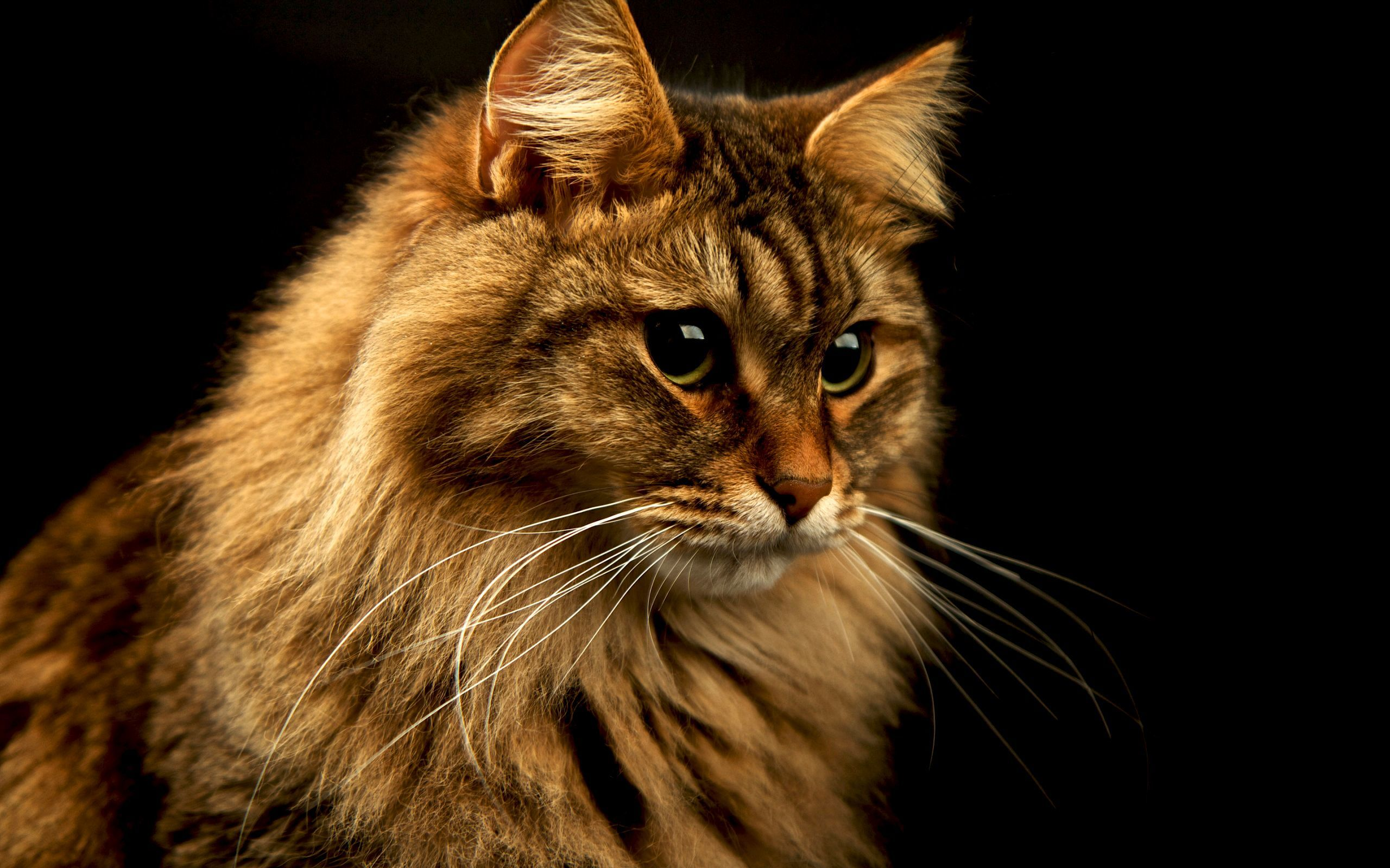 40411 скачать обои Кошки (Коты, Котики), Животные - заставки и картинки бесплатно
