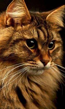 40411 baixar papel de parede Animais, Gatos - protetores de tela e imagens gratuitamente
