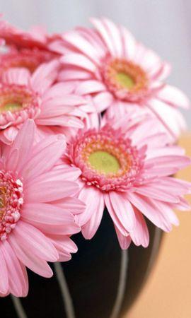 47837 descargar fondo de pantalla Plantas, Flores: protectores de pantalla e imágenes gratis