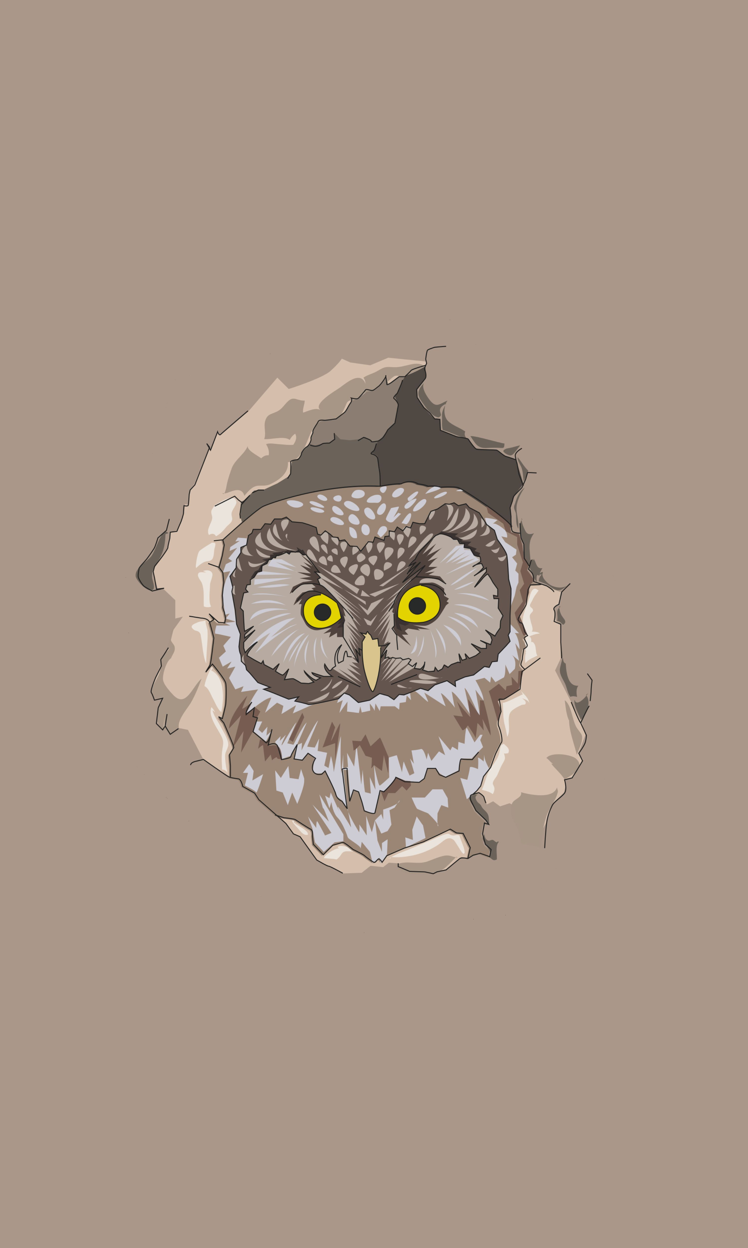 144509 download wallpaper Vector, Owl, Peek Out, Look Out, Art screensavers and pictures for free