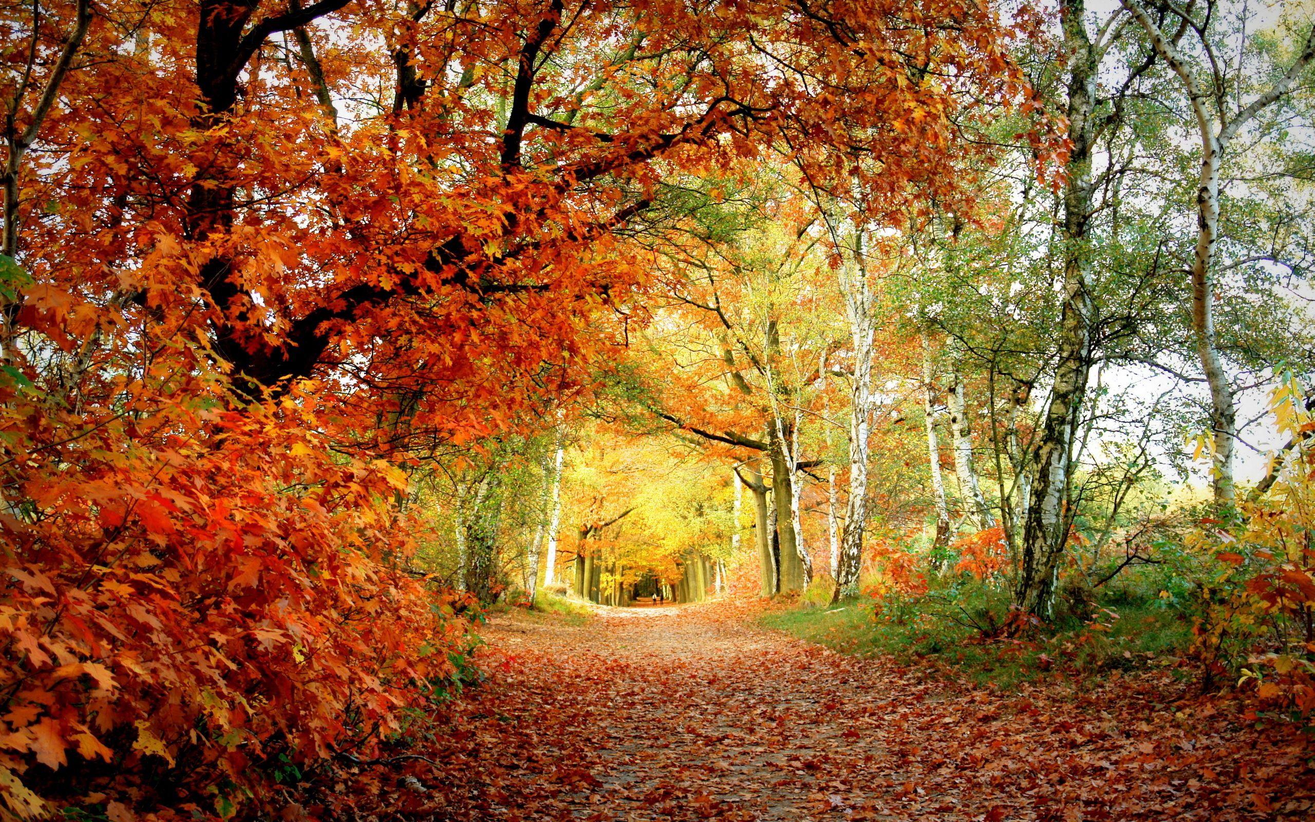 137027 Заставки и Обои Осень на телефон. Скачать Осень, Природа, Деревья, Листья, Березы, Дорожка, Дуб картинки бесплатно