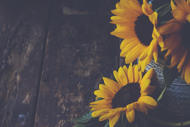 62732 скачать обои Цветы, Лепестки, Ваза, Желтый, Подсолнухи - заставки и картинки бесплатно