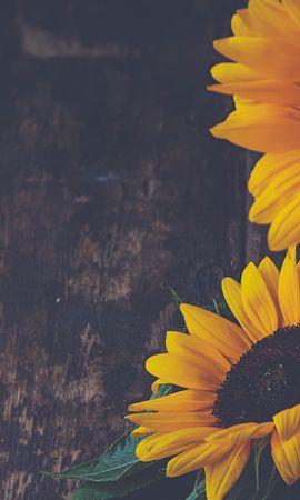 62732 télécharger le fond d'écran Fleurs, Pétales, Vase, Tournesols - économiseurs d'écran et images gratuitement