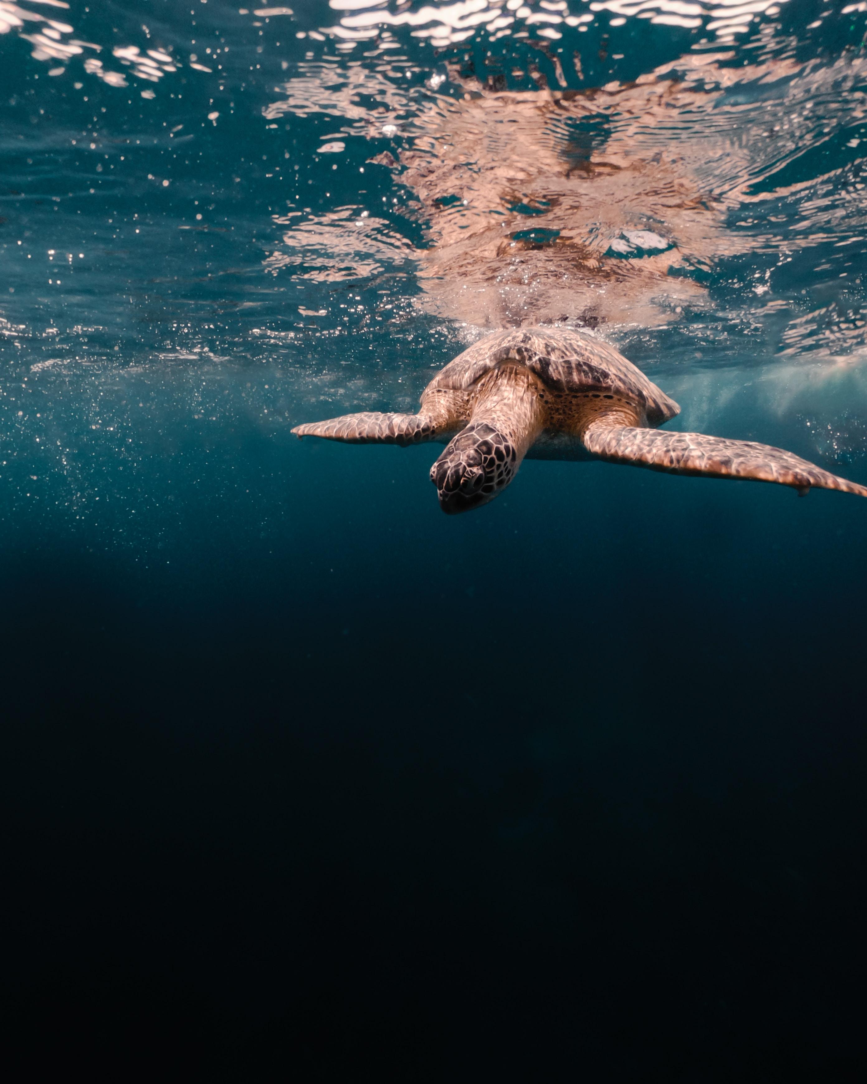 107699 Hintergrundbild herunterladen Tiere, Wasser, Sea, Unterwasserwelt, Schildkröte - Bildschirmschoner und Bilder kostenlos
