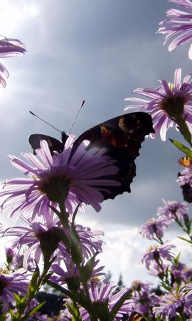 8835 скачать обои Растения, Бабочки, Цветы - заставки и картинки бесплатно