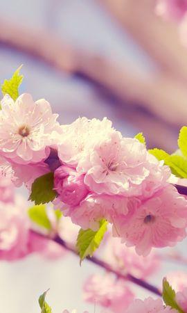 26434 скачать обои Растения, Цветы, Деревья - заставки и картинки бесплатно